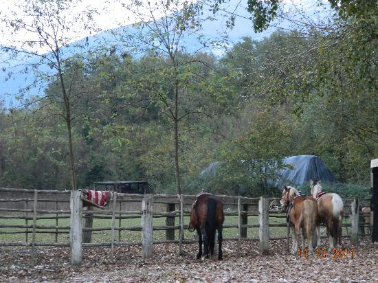 Italy Farm Stay: Nearby horseback riding facility