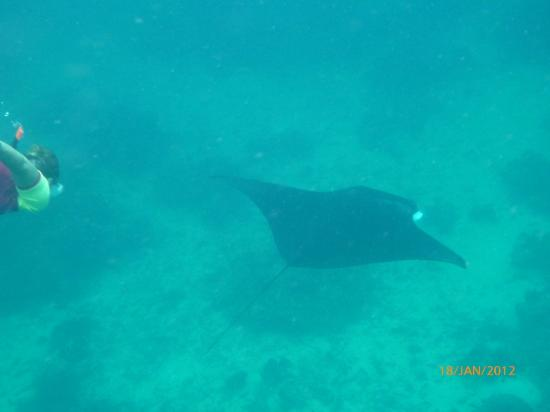 Reza and Dira Homestay: Manta in Sangalaki Island