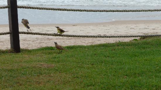 Pousada Marambaia Do Porto : Dependendo do horário, você pode ter a companhia de pássaros no jardim.