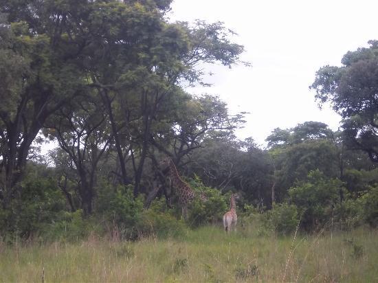 Mukuvisi Woodlands: Mum and baby