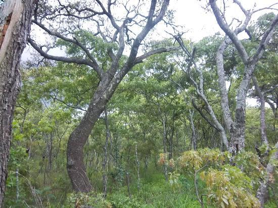 Mukuvisi Woodlands: Indiginous trees
