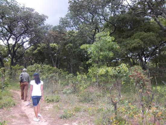 Mukuvisi Woodlands: Out on the walk