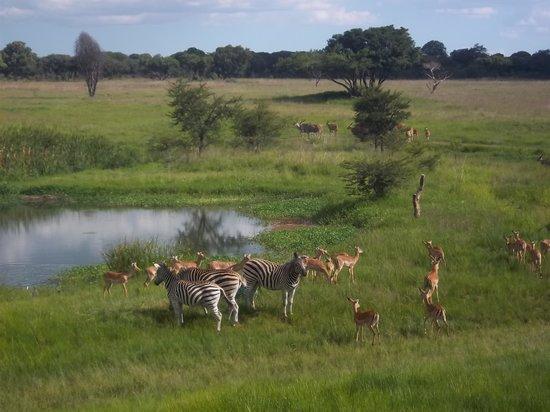 Harare-bild
