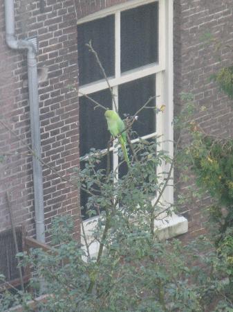Hotel Alexander: Resident parrot