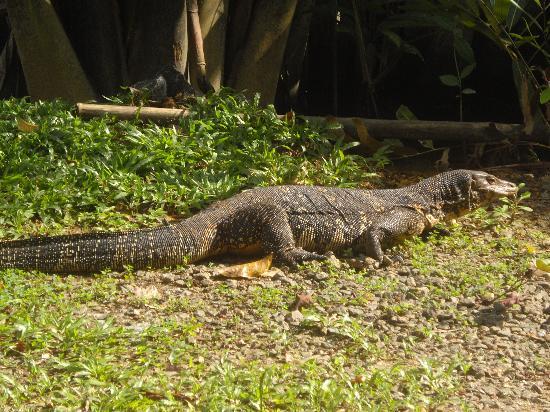 Dalmanuta Gardens - Ayurvedic Resort & Restaurant: Wilde beesten die overal rondliepen
