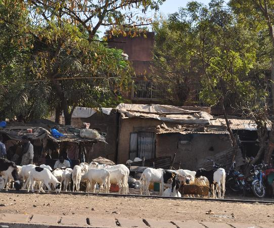 Bamako city centre, market : Right downtown get your own sheep for slaughter