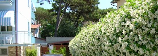 Hotel Riviera Blu: Row of sweet smelling Jasmine bushes