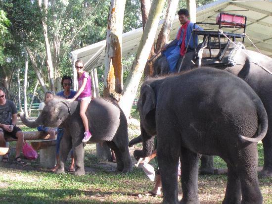 Angsana Laguna Phuket: Baby elephants to ride