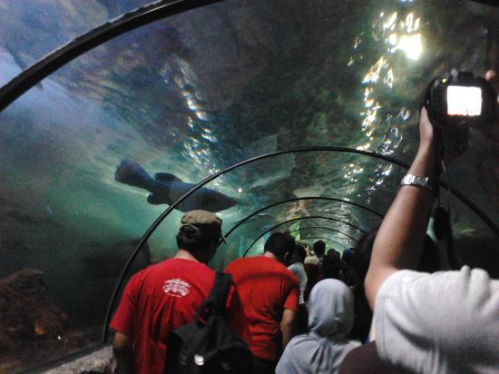 Sea World: under water fish tank