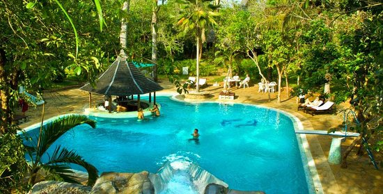 Forest Dream Resort : Swimming pool