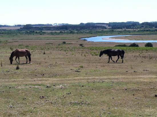 Estancia VIK Jose Ignacio: View from our room