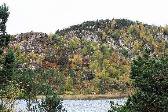 Cairngorms National Park: Multi-coloured trees near far end of  Loch An Eilein