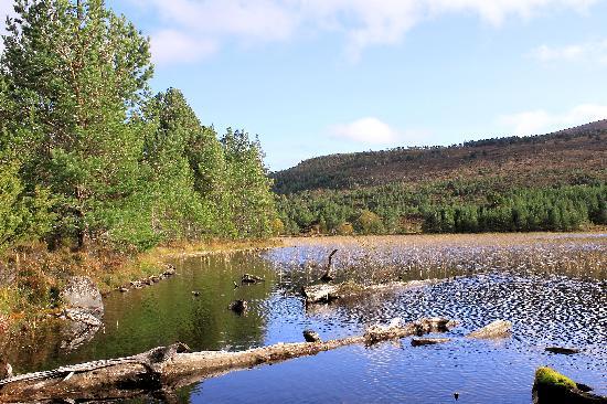 Cairngorms National Park: Sunken logs near end of  Loch An Eilein walk