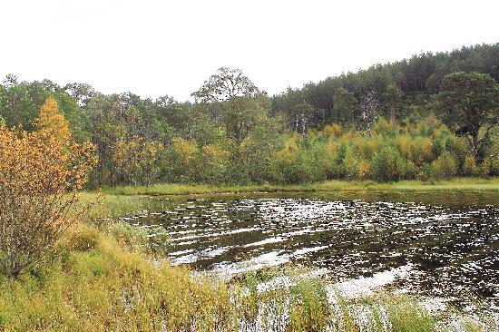Cairngorms National Park: Further round circular Loch Morlich walk