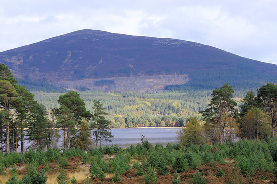 ‪Cairngorms National Park‬