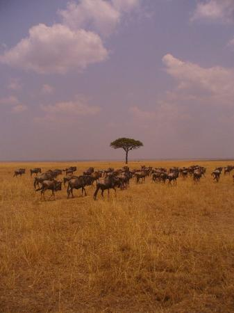 Basecamp Masai Mara: a dream