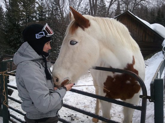 Iron River, MI: Visiting the horse, Apache, at the Homestead Lodge.