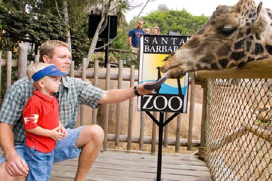Feed the giraffes at the Santa Barbara Zoo!