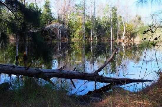 Apoxee Wilderness Trail: trail views