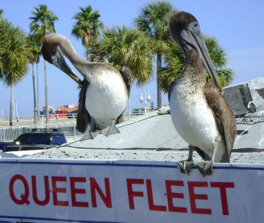 Queen fleet deep sea fishing clearwater fl top tips for Queen fleet deep sea fishing clearwater fl