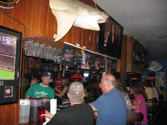 Sand Bar: Bar Area/Cool Shark