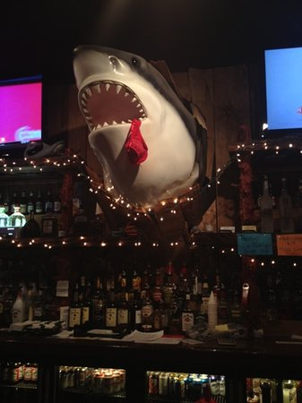 Sharks Roadhouse: the shark!