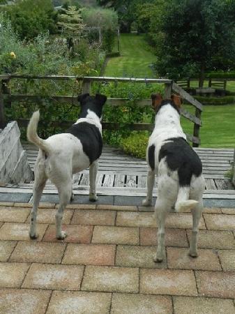 Fothergills on Mimiha Bed & Breakfast: Mo and Max keeping guard!