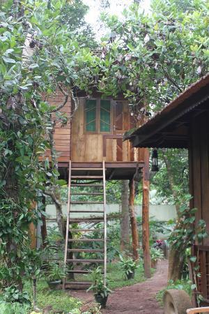 Gowri Residence: giardino