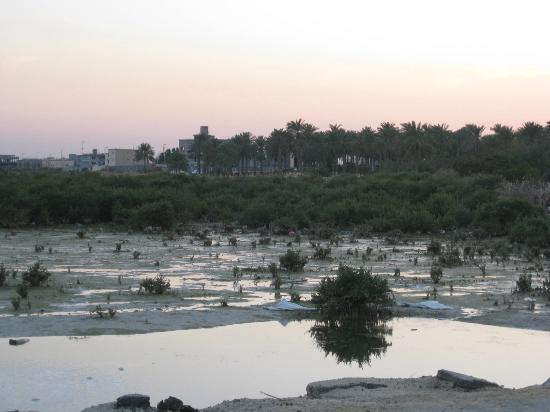 Saudiarabien: trees from the coast