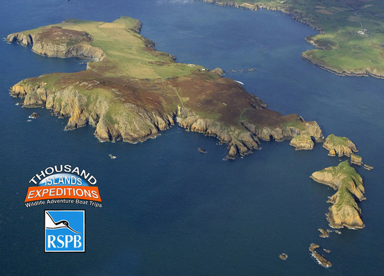 Ramsey Island Boat Trips -Thousand Islands Expeditions: Ramsey Island RSPB Nature Reserve