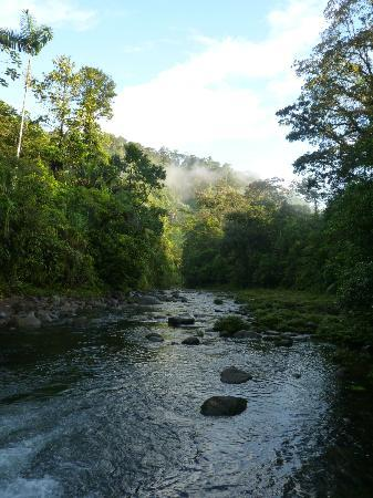 Rainforest Adventure Lodge: Early morning walk to the river