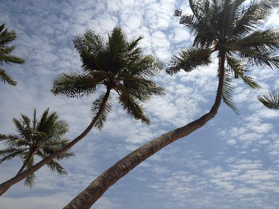 Amanwella: Looking at the sky from the coconut grove