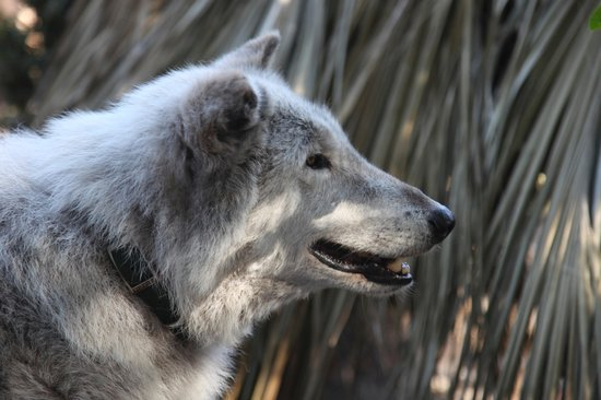 Shy Wolf Sanctuary Education & Experience Center