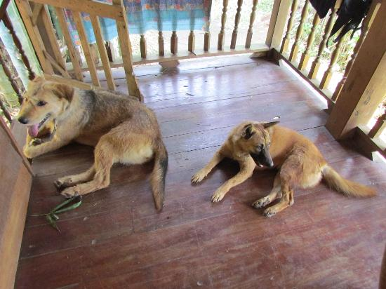 Chiang Dao Lodge: Two of the menagerie on guard...asleep!