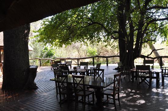 Royal Tree Lodge: verandah
