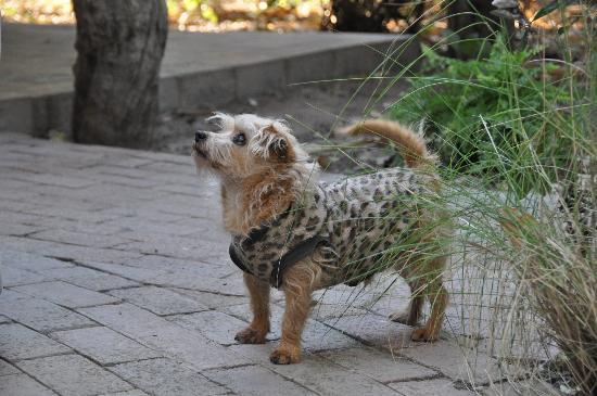 Royal Tree Lodge: Guard dog
