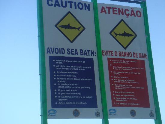 tiburones en Recife