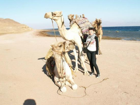 Sinai Voyage: Кстати, на Синае все верблюды одногорбые