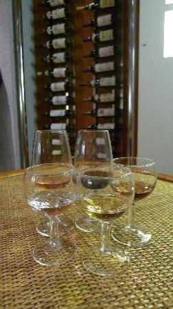 Wine Museum : Wine Tasting(2)