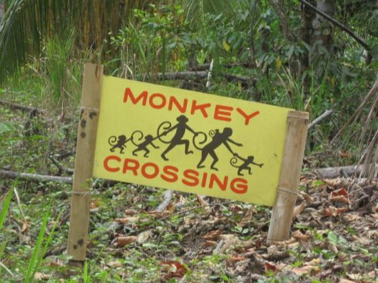 Casa Bambu Resort: A place where this sign is not a joke