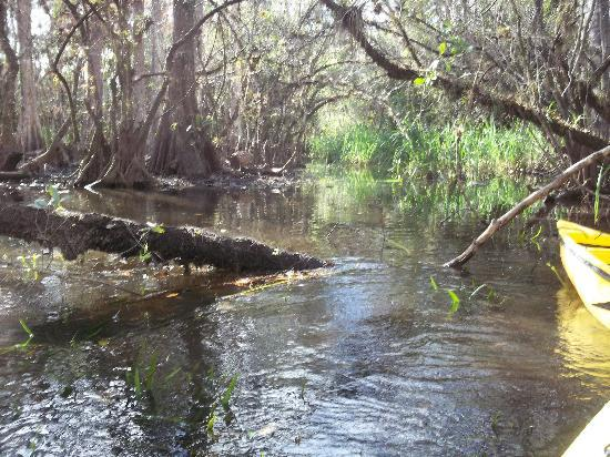 Everglades Area Tours: Deep in the Everglades