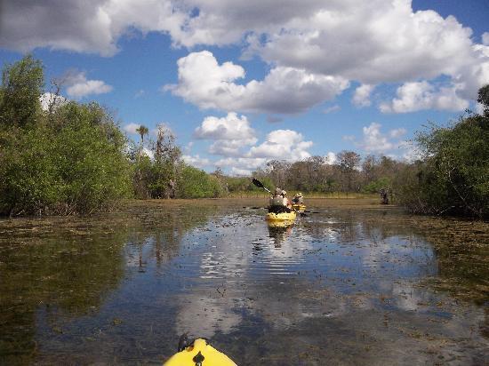 Everglades Area Tours: Teeming with wild life