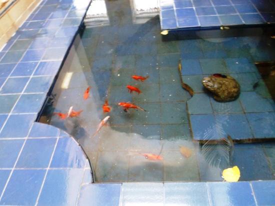 Fish at Casa de la Chicheria