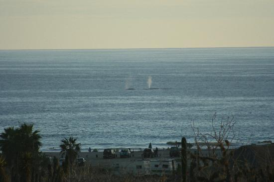 Villas de Cerritos Beach: Whale spouts on a sunny afternoon
