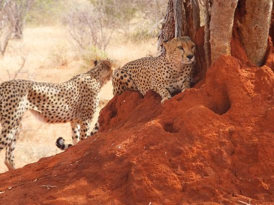 Safari Kenya Watamu - Day Tours: rare volte si vedono queste meraviglie..!!