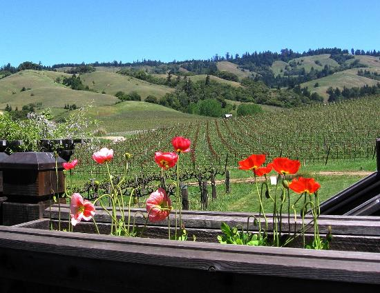 Navarro Vineyards: Poppies and wine - nice!