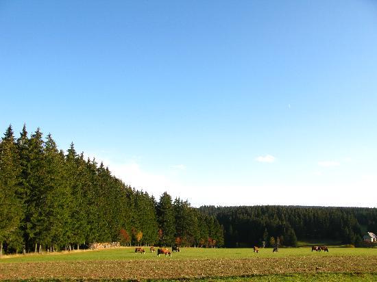 Schwarzwald Parkhotel: schöner Platz
