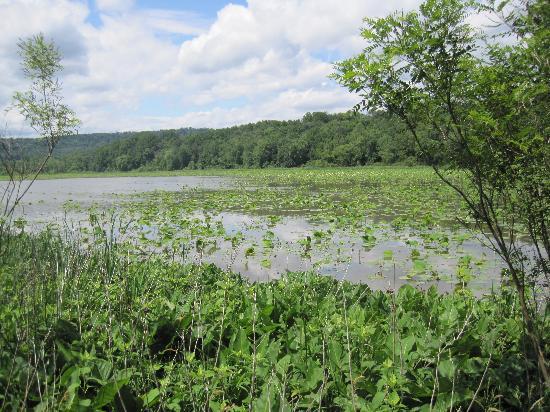 Harrisburg, PA: Swamp view