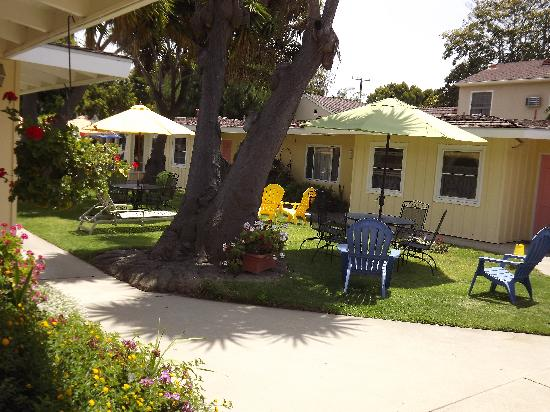 Beach House Inn & Apartments: 50 Year Old Yucca Tree