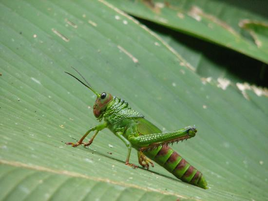 Playa Manuel Antonio: Cool insects